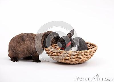 Króliki Easter