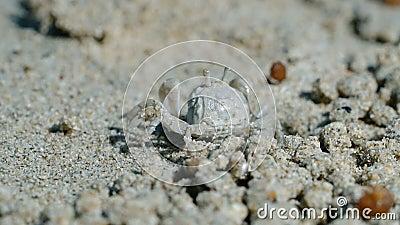 Krabbe nahe seinem Loch stock video