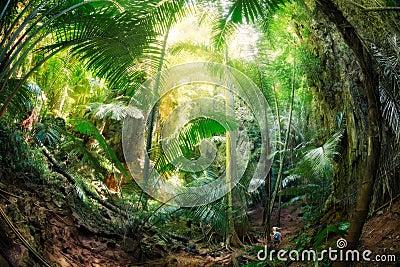 Krabi的,泰国密林