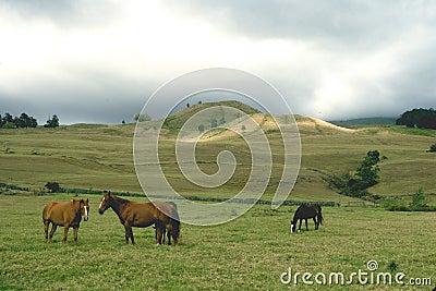 Kraj Maui kraj