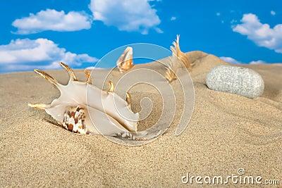 Krajobrazowi seashell nieba kamienie
