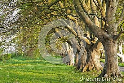 Kreskowi drzewa
