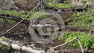 Kristalhelder water in een bergketen stock videobeelden