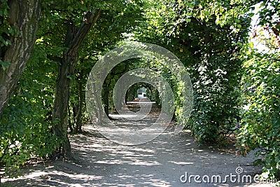 Kromeriz drzewa tunel