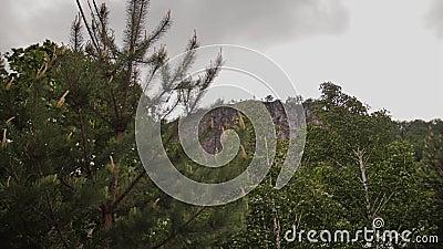 Kronen von den Bäumen, die schön unter dem Druck des Winds in den Bergen beeinflussen stock footage