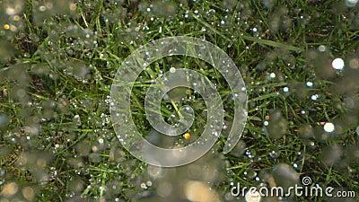 Kropla Heavy Rain Spada puszek na ziemi w lesie Strzelał na fantomu i Laowa zbiory wideo