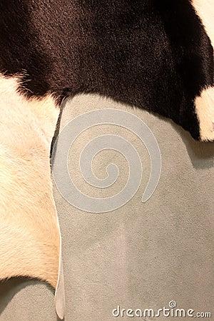 Krowy skóra
