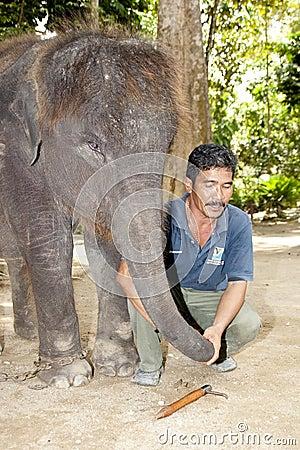 Free Kuala Gandah Elephant Orphanage Sanctuary Stock Photos - 16225333