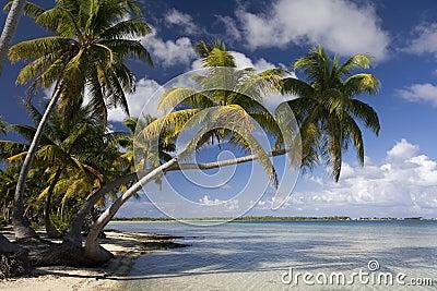 Kucbarskiej wyspy wysp raj tropikalny