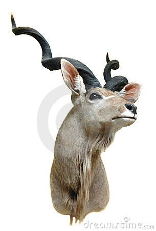 Free Kudu Mount Stock Images - 3221464