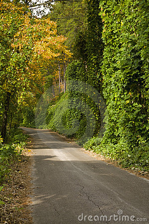 Kudzu, Autumn, Cherokee NF