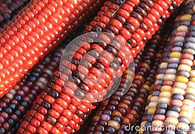 Kukurydzany hindus