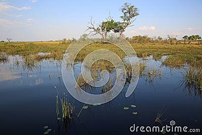 Kwando River