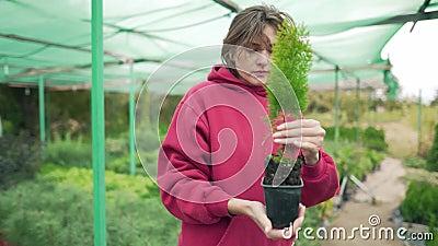 Kwiaciarka sprawdza piękne zielone sadzonki w szklarni na zewnątrz Kontrola i badania roślin botanicznych zdjęcie wideo