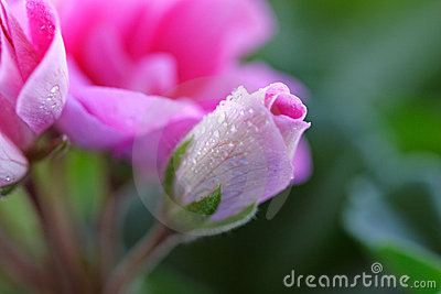 Kwiat 3 różowe