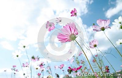 Kwiat dziki