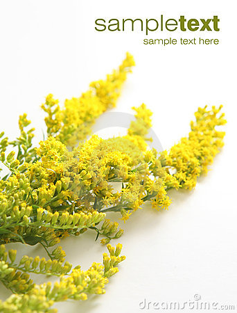 Kwiatu kolor żółty