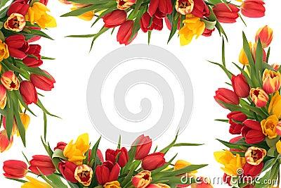 Kwiatu rabatowy tulipan
