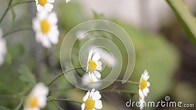 Kwiaty zbiory