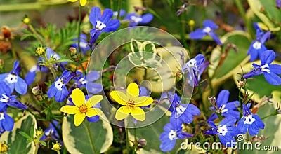 Kwiaty czub
