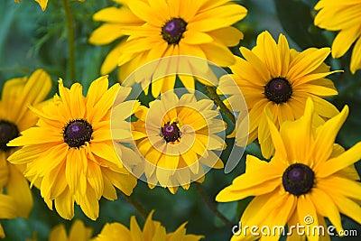 Kwiaty tła żółty