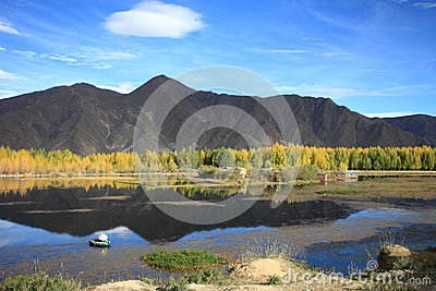 Kyi river and poplar trees