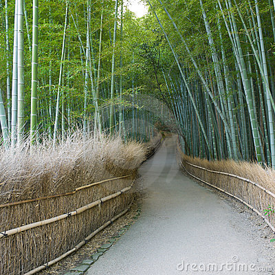 Free Kyoto Bamboo Grove Stock Image - 4842381