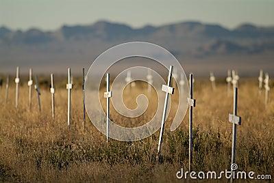 Kyrkogården korsar