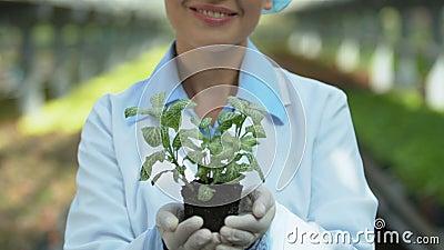 Lächelnd weibliche Biologin mit Grünpflanzen, Gewächshausanbau, Botanik stock footage