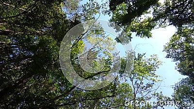 Långsam miljö med vackert landskap, himmel, moln, solljus och skog från att titta upp genom bilens öppna fönster, köra bil eller lager videofilmer