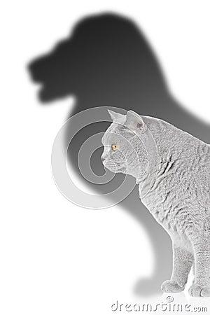 Löwe und Katze
