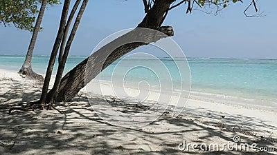 L'île des Maldives avec plage, palmiers et mer Océan Indien et ciel nuageux clips vidéos