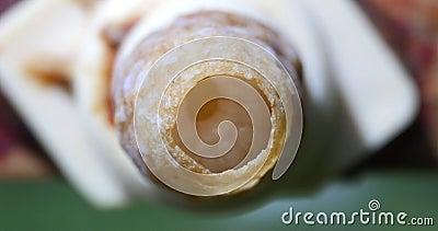 L'Abeille de Miel d'Europe, l'apis mellifera, la cellule de la Reine vue d'en haut, nous voyons la respiration des Larves, la ruch banque de vidéos