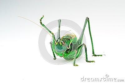 L action de la sauterelle