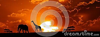 L Africa