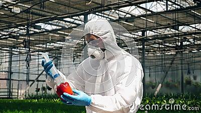 L'agronome injecte du liquide dans du poivre de cloche dans une serre clips vidéos