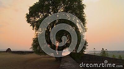 L'albero sopra le pareti archivi video