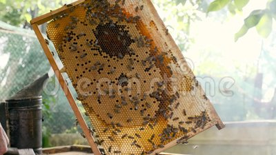 L'apicoltore tiene in mano un pettine a nido d'ape nel telaio video d archivio