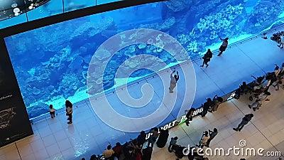 L'aquarium du Dubai Mall, le plus grand centre commercial du monde - les attractions touristiques du centre-ville de Dubaï banque de vidéos