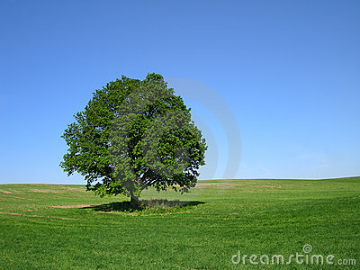 L arbre de chêne