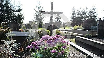 L'automne de chrysanthèmes fleurit la croix grave de monuments de cimetière banque de vidéos