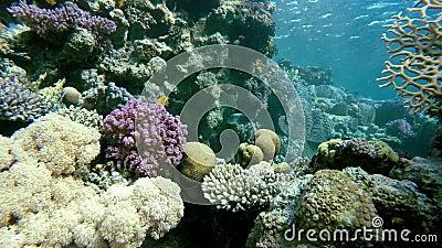 L'eau claire Plongeur et poissons banque de vidéos