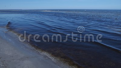L'eau de mer baltique avec l'mauvaise herbe et le soleil de floraison foncés d'en haut banque de vidéos