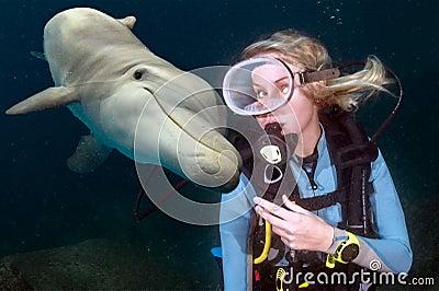 plongeur rencontre un grand requin blanc Metz