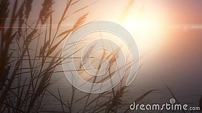 L'eau du soleil d'aube d'herbe de lac sunset banque de vidéos