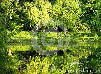 L eau verte