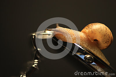 L escargot rampe sur la montre