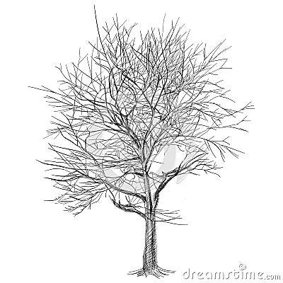 Grande albero nudo senza foglie albero di sakura for Sakura albero