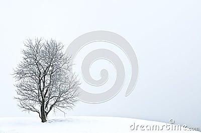 L hiver d arbre