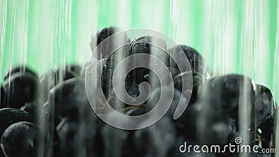 L'uva, l'acqua a versa dalla cima in molti getti, alla fine di video fermata dell'acqua, primo piano archivi video
